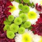 Как очень просто размножить хризантемы