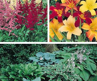 Теневыносливые растения для сада с фото