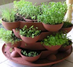 пряные травы в горшочках