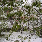 Зимние страхи садовода