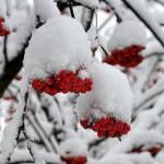 Оживляем сад зимой