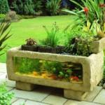 Аквариумные растения: советы по выращиванию