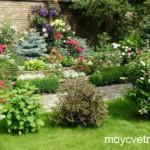 Растительные композиции в ландшафтном дизайне