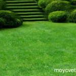 Делаем газон сами